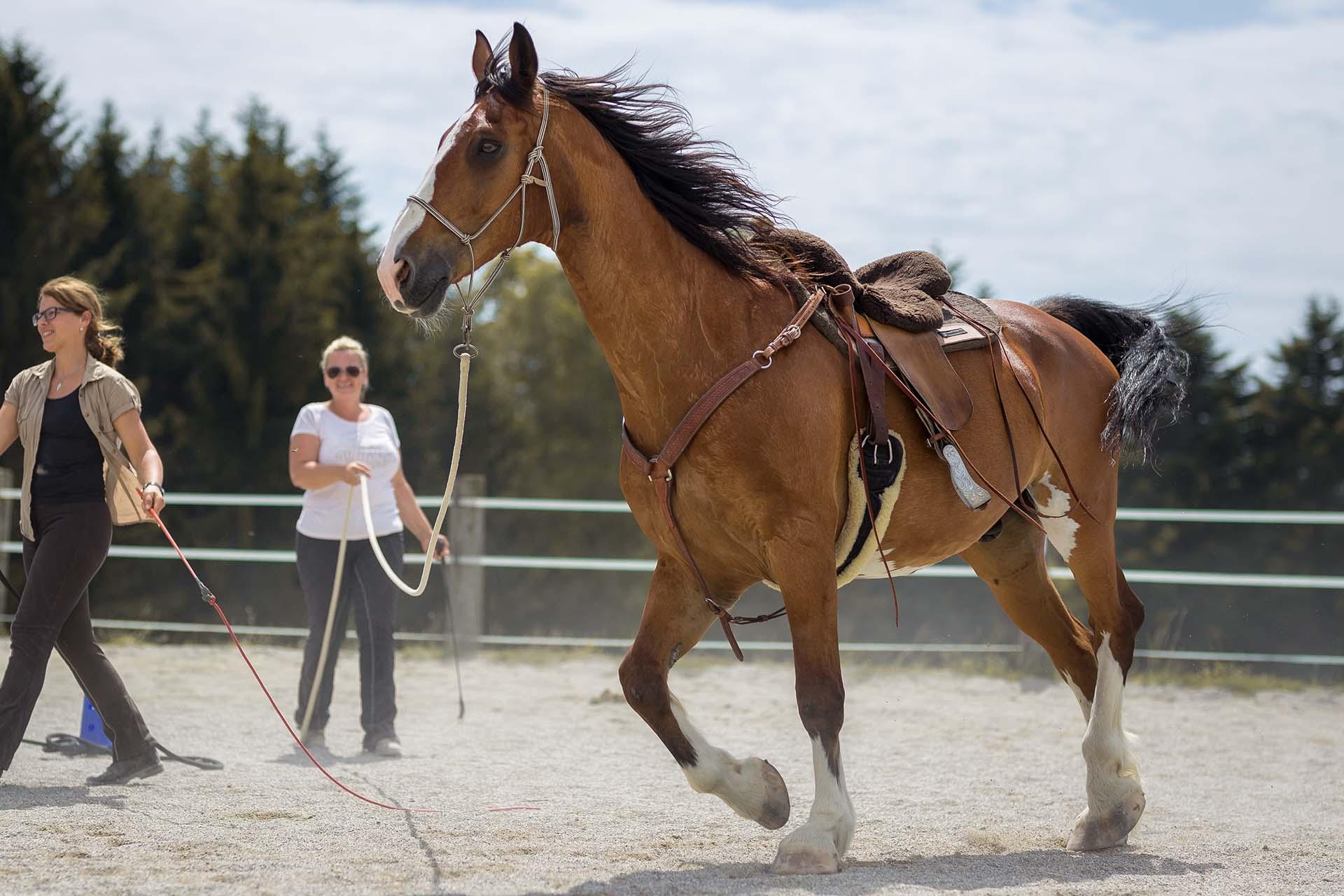 Hund&Pferd_Equine