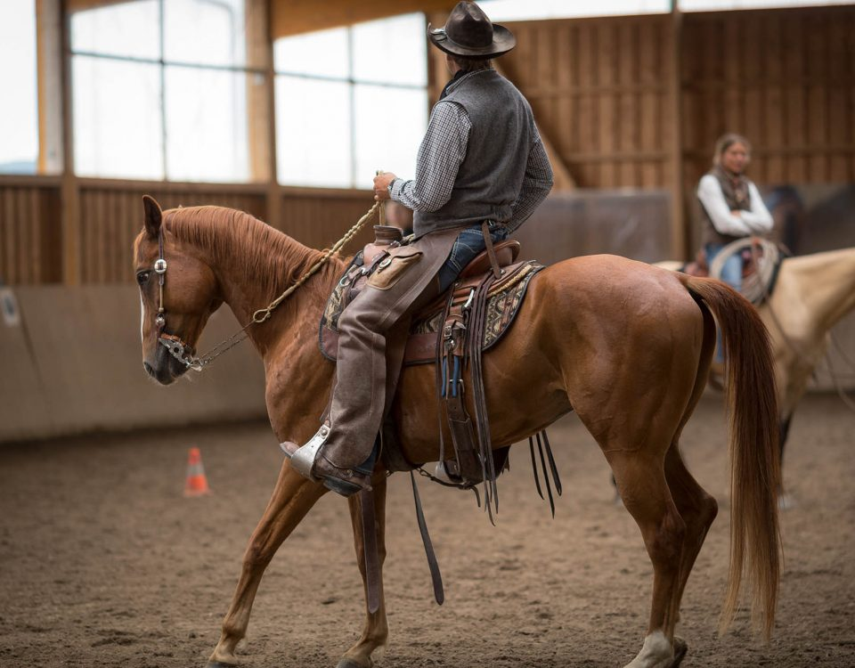 Hund&Pferd_Equine11