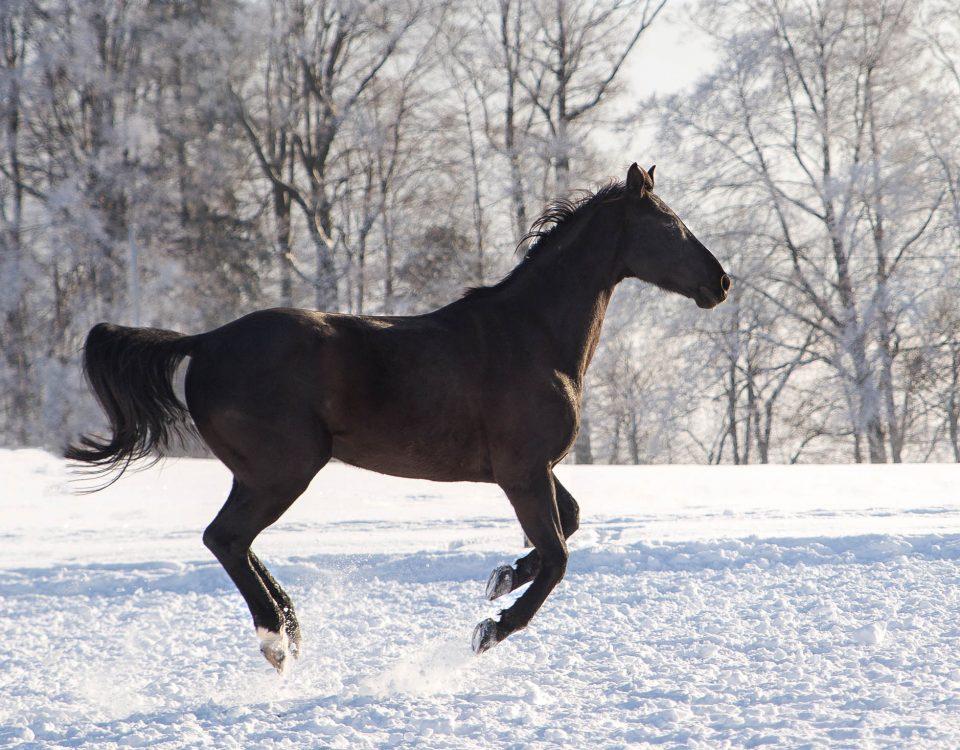 Hund&Pferd_Equine12