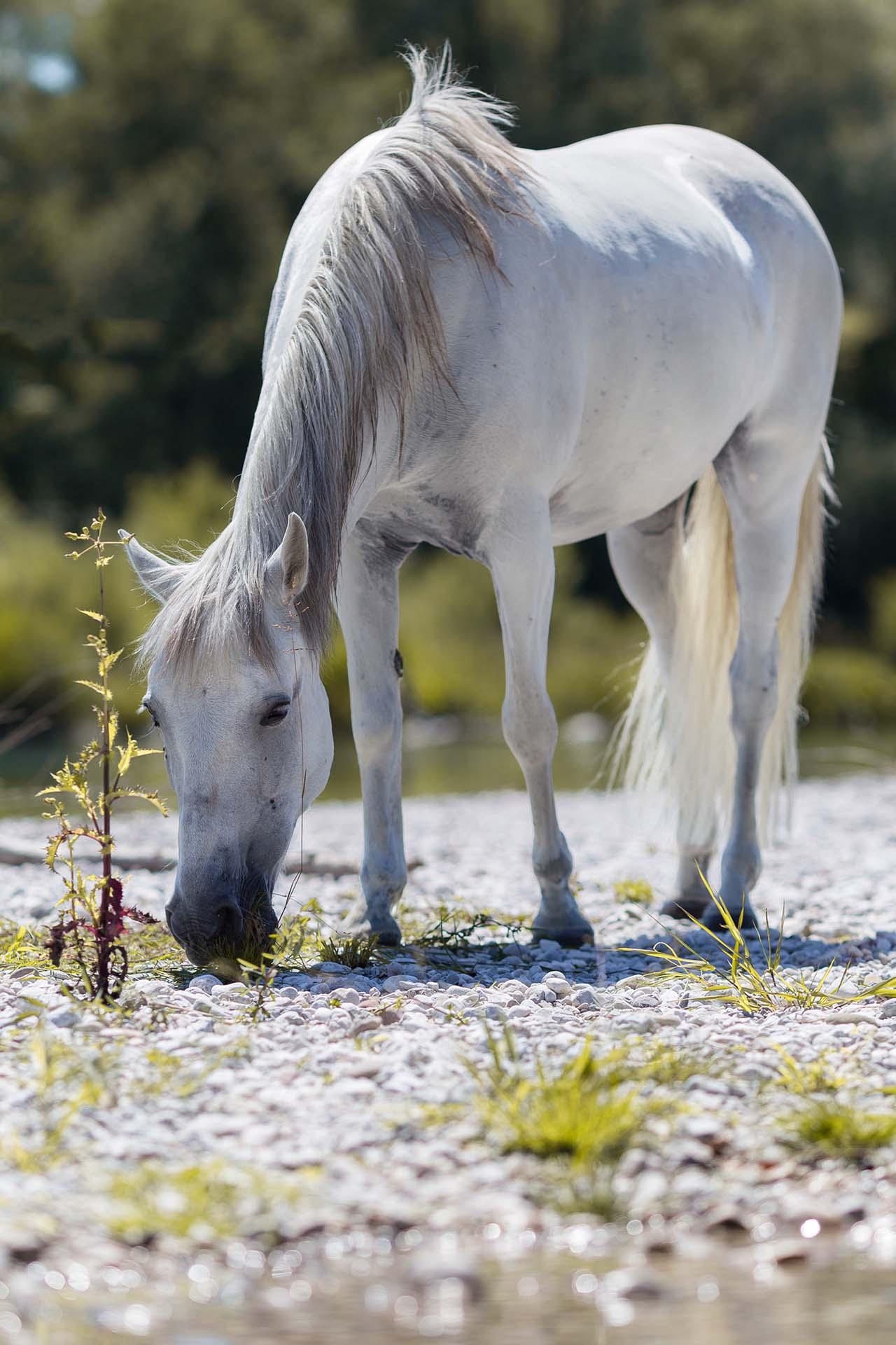 Hund&Pferd_Equine5