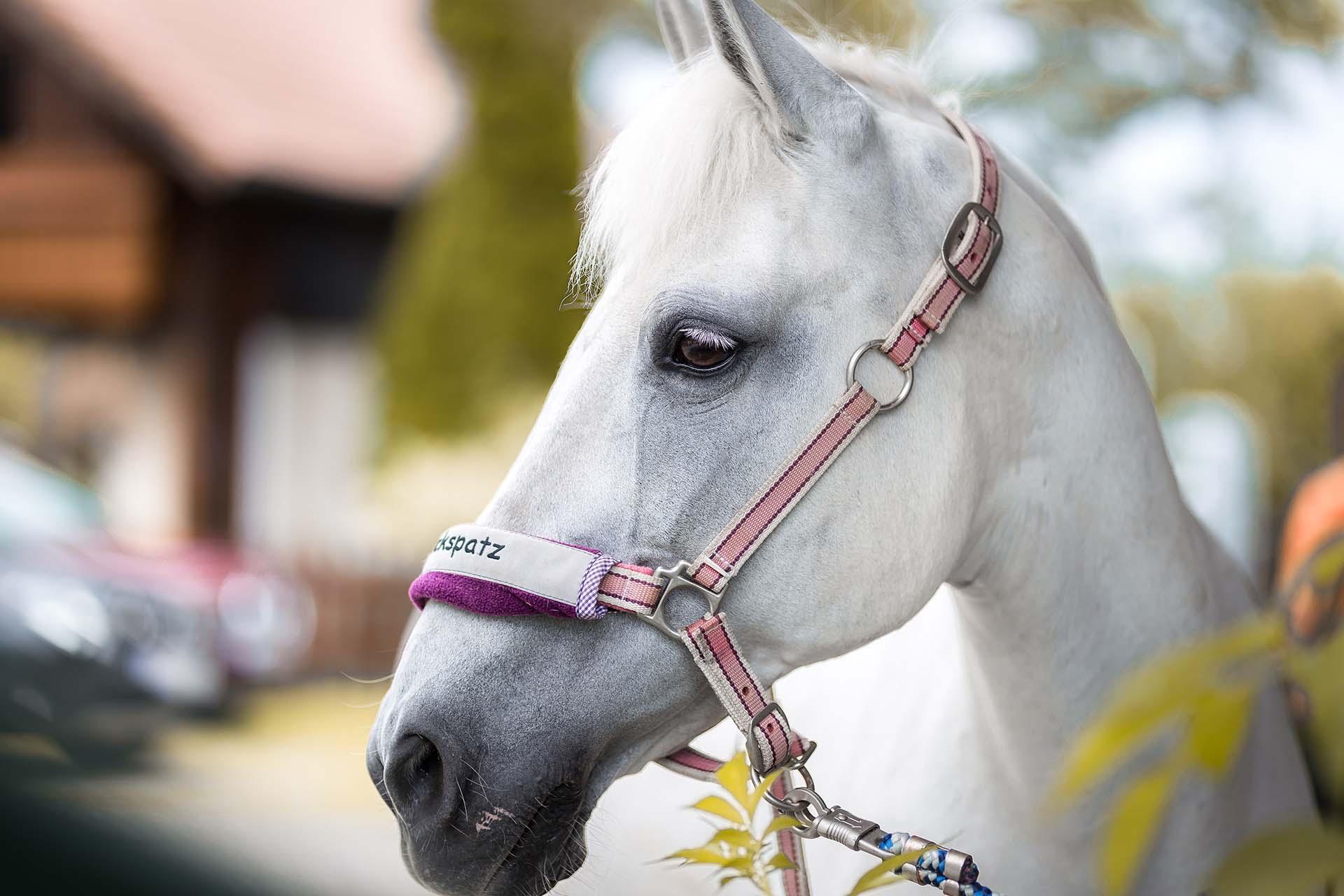 Hund&Pferd_Equine7