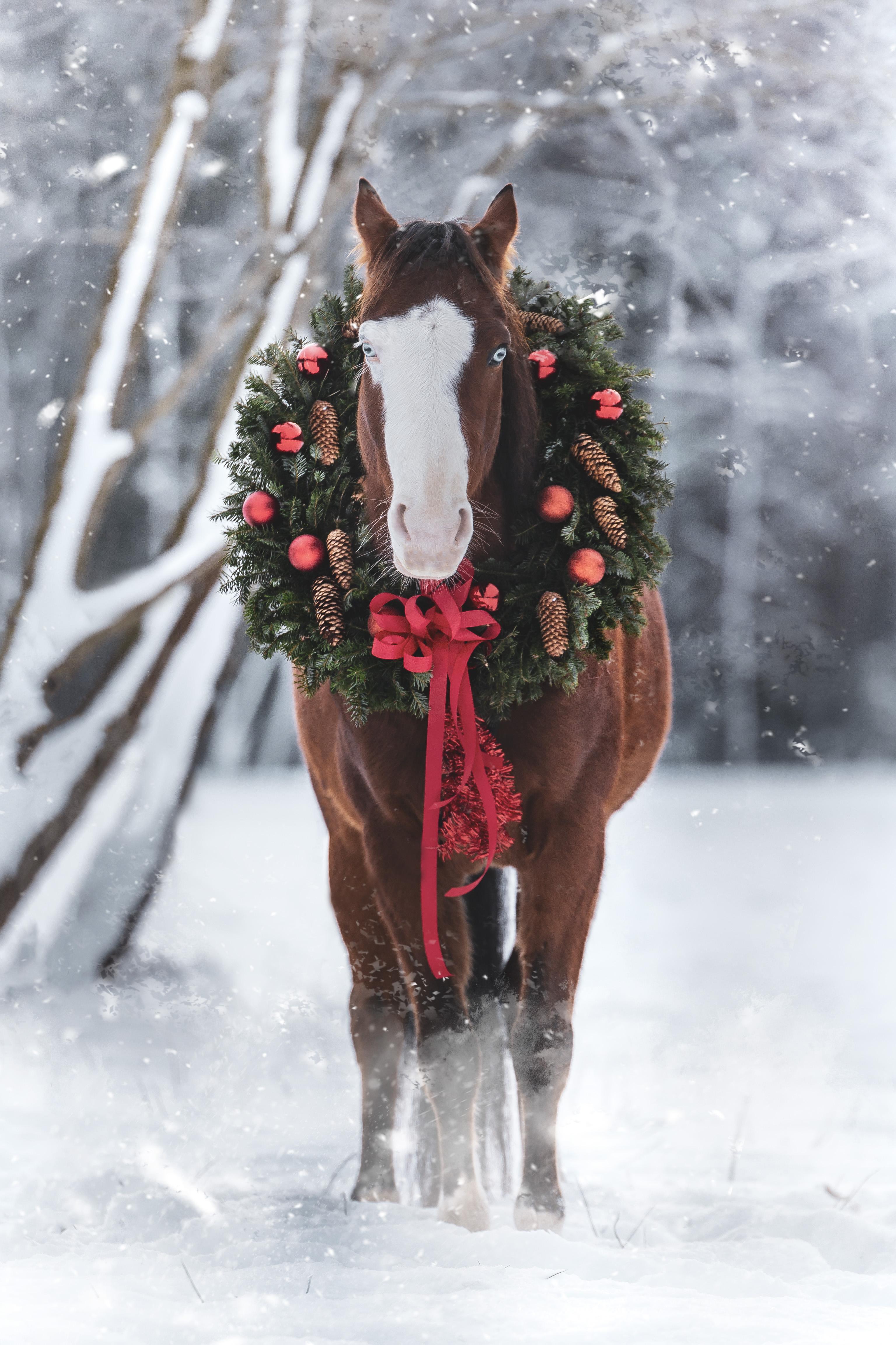 Hund&Pferd_Equine_Snow_Schnee