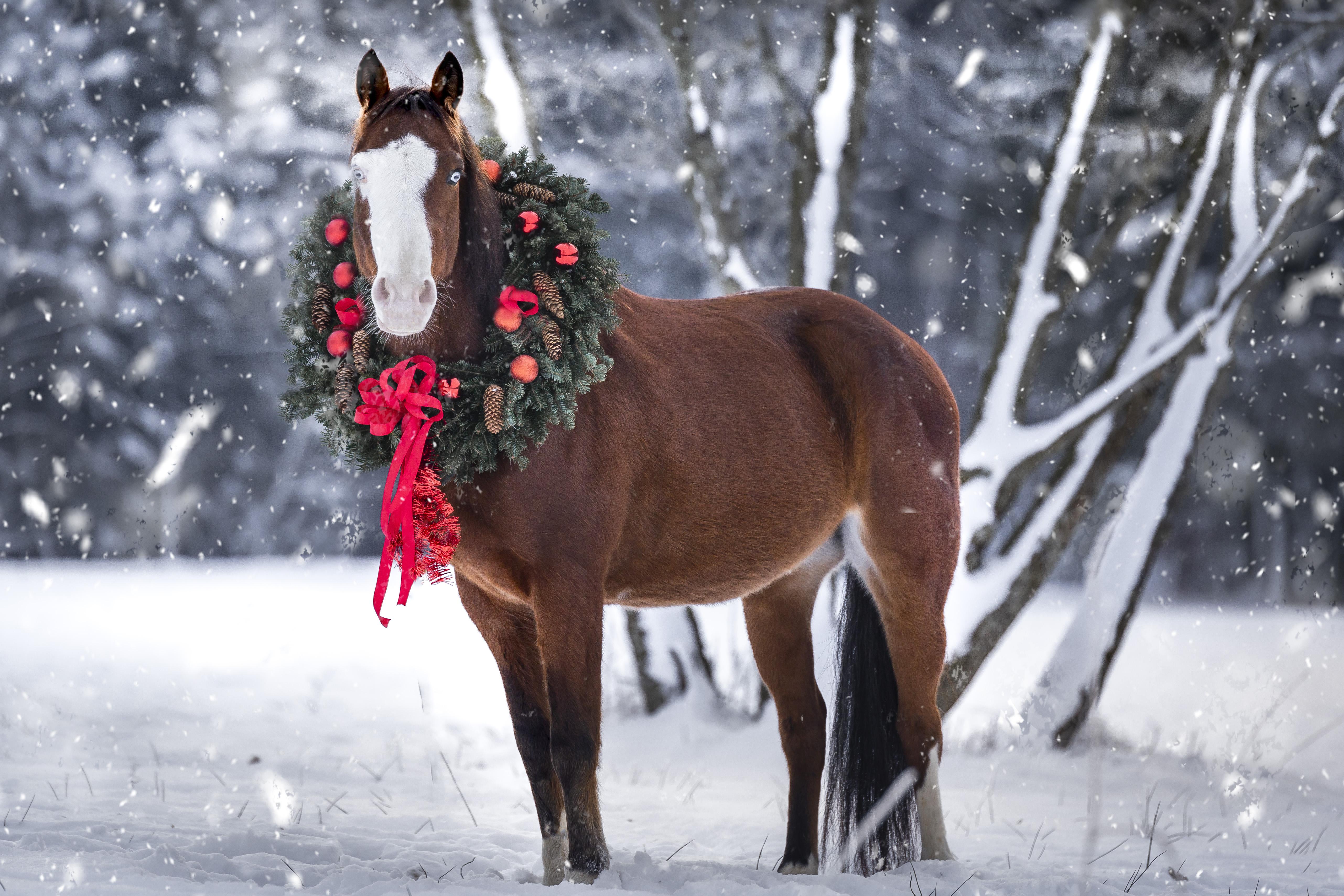 Hund&Pferd_Equine_Winterpferd