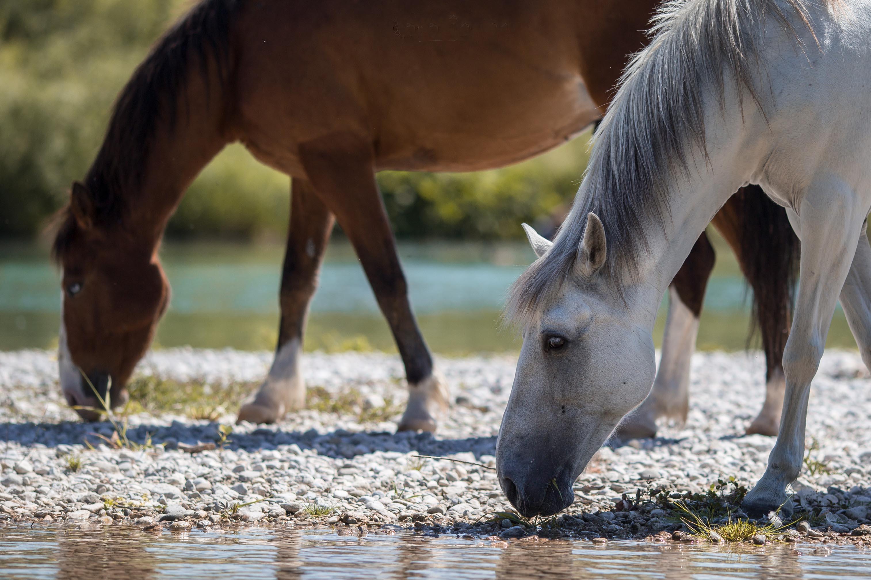 Hund&Pferd_Pferde