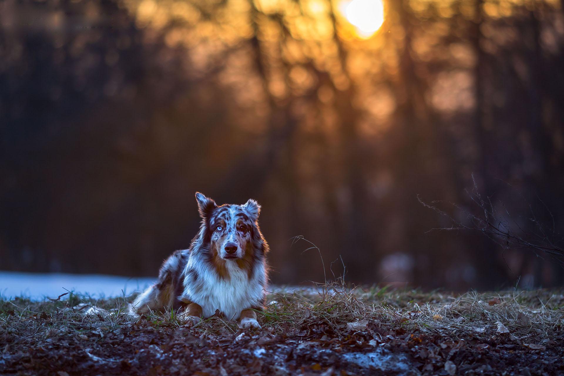 Hund&Pferd_Shepard2