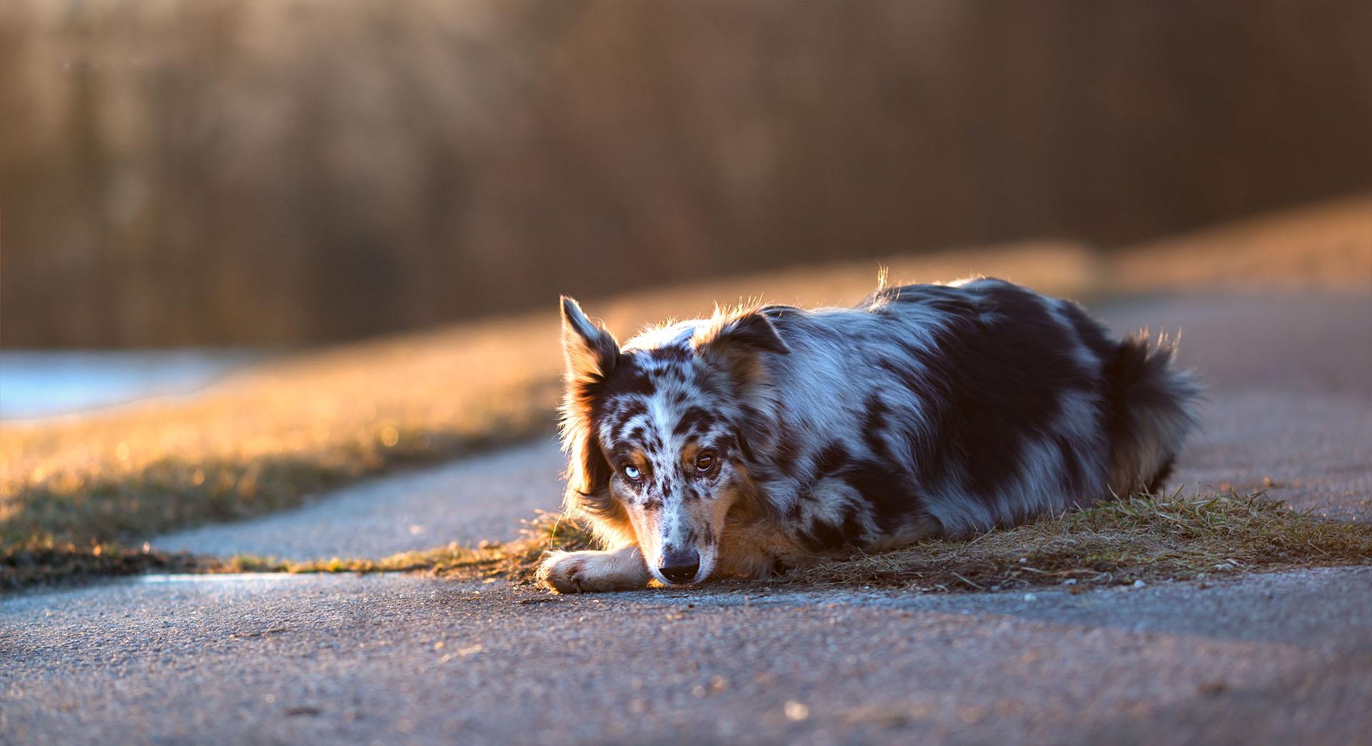 Hund&Pferd_Shepard3
