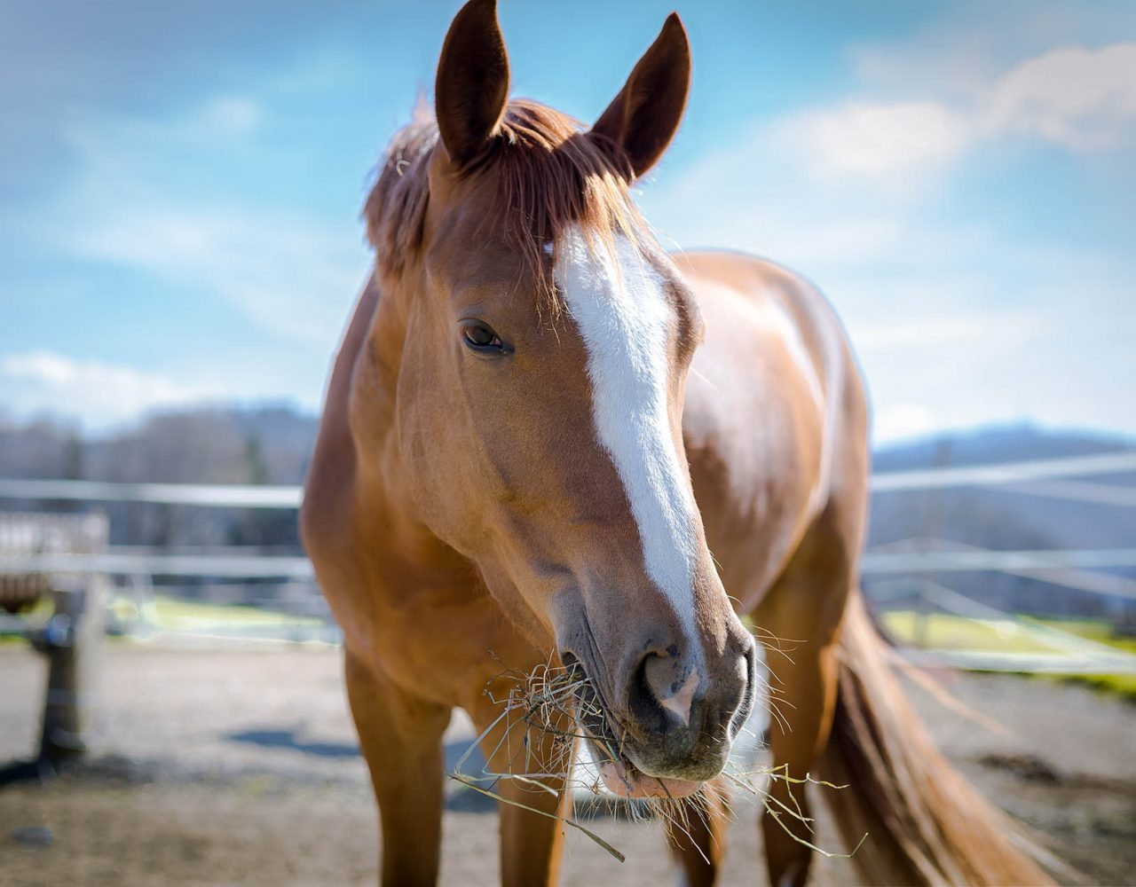 Hund&Pferd_Welpe10