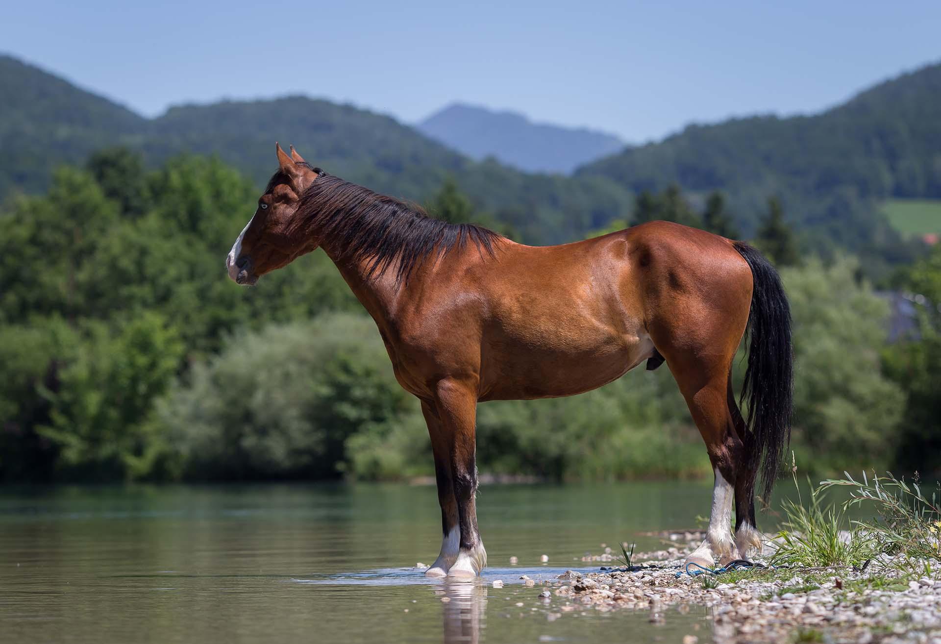 Hund&Pferd_ache