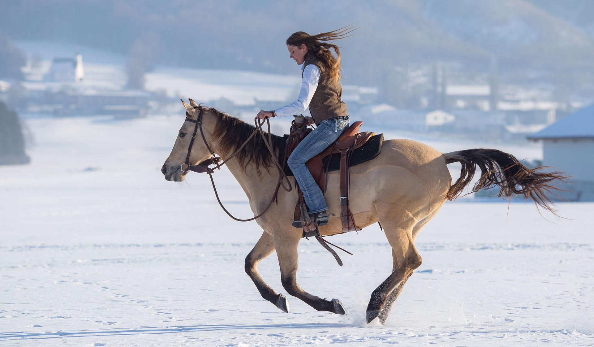 Hund&Pferd_snowEquine