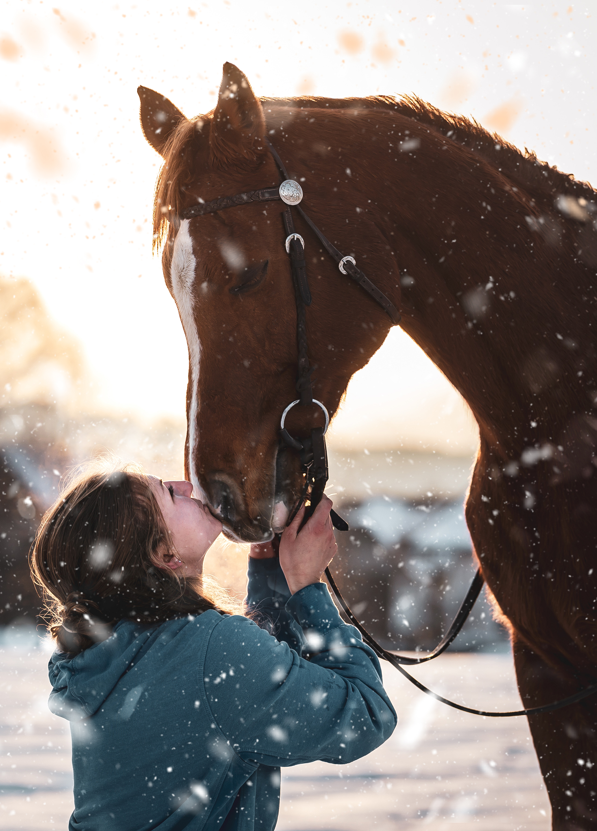 EQUIN_WinterShooting_Pferd1