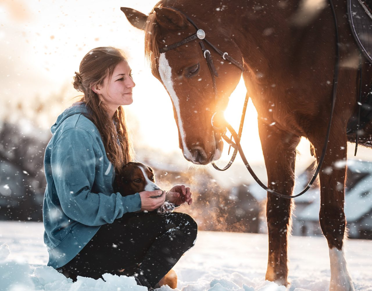 Haustiere_WinterShooting_Pferd1