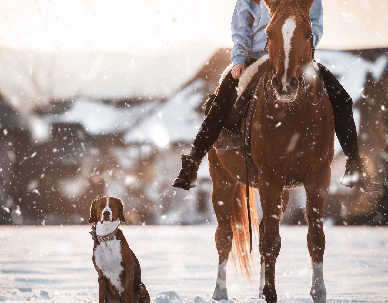 Reiten_WinterShooting_Pferd1